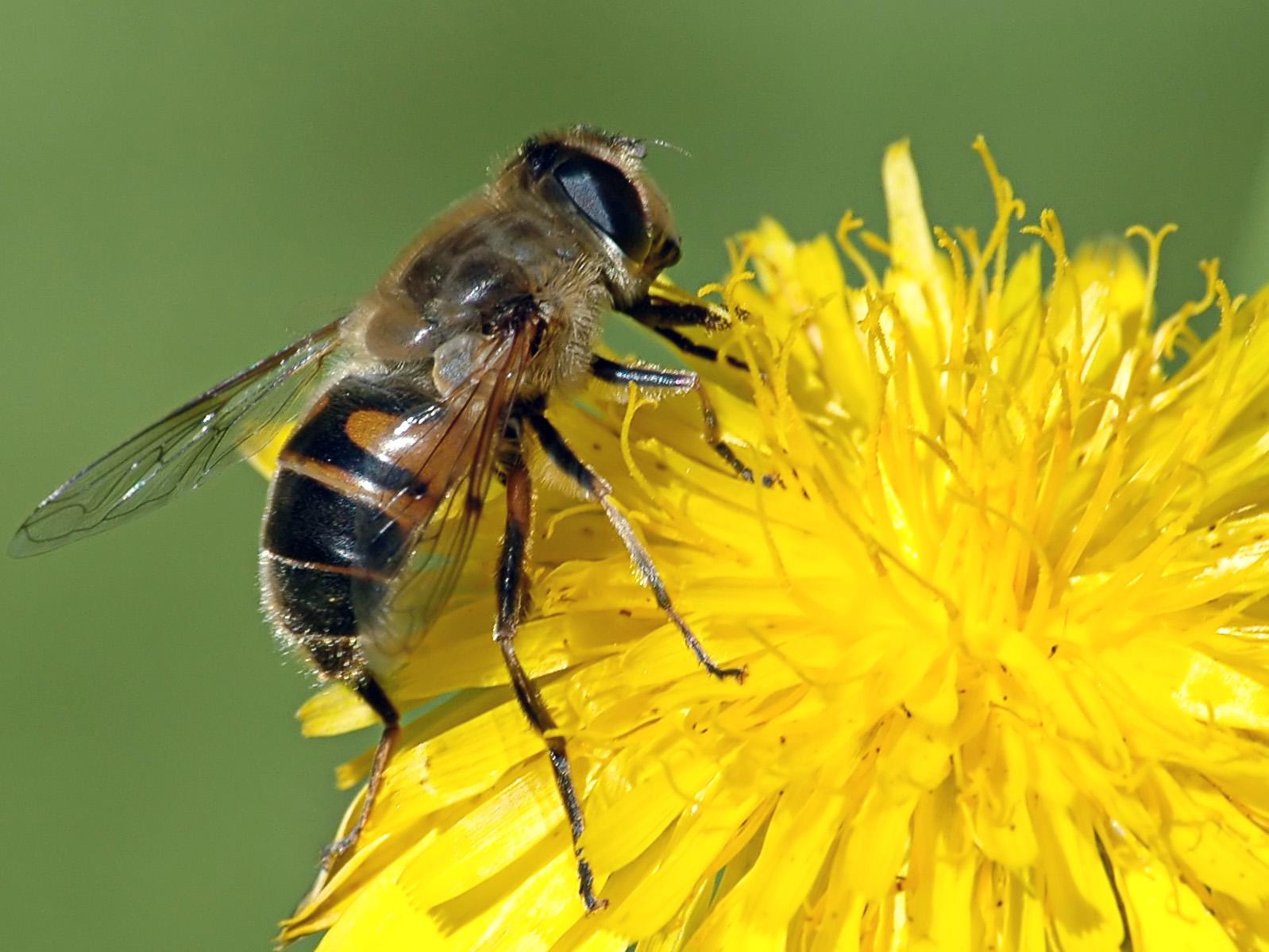 Proyecto recupera bosque nativo a través de la producción de miel
