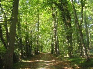 Conaf presentó actualización del catastro de vegetación nativa