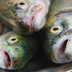 Subsecretario de Pesca Criticó a Salmonera Invermar Por Evitar Orden de Cosechar Jaulas con Virus Isa