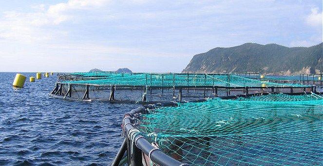 Sernapesca descarta que enfermedad del sector salmonero sea grave