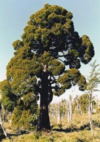 Etapa de construcción de Central Mediterráneo talará 200 hectáreas de bosque nativo