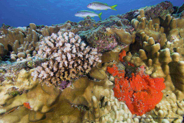 Senador Horvath subrayó en la importancia de las áreas marinas protegidas