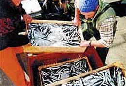 Pescadores artesanales advierten que en julio ya no podrán extraer merluza