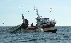 Autoridades reconocieron poca coordinación por decreto que permite pesca de arrastre en zona austral