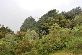"""Protegen bosque de niebla en Pichidangui para convertirlo en un """"nuevo Fray Jorge"""""""