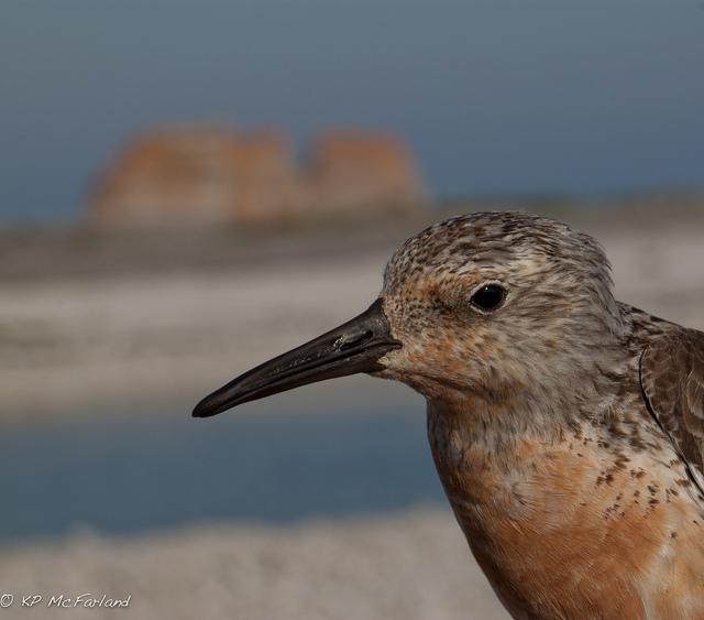 Hoy 9 de mayo es el Día Mundial de las Aves Migratorias