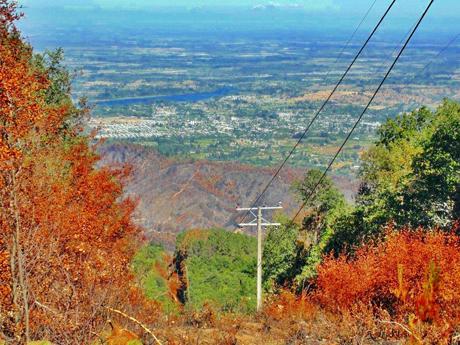 Positivo balance de recuperación forestal en zona de mega incendio