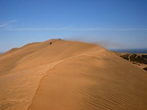 Campo dunar de Concón aún no cuenta con un plan de manejo