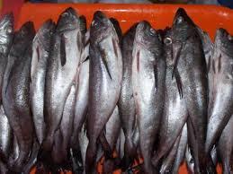 Sernapesca combate pesca ilegal de la merluza con plan especial de fiscalización