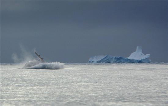 Cambio climático provocó una mayor intensidad de los vientos antárticos