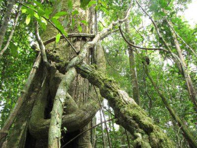Estación de investigación de montaña posibilitará análisis de biodiversidad y planificación territorial