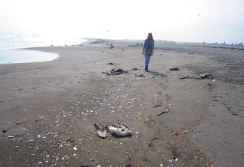 Extraña muerte de más de mil aves en Arica