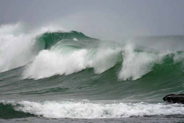 Preocupan los efectos del aumento de la acidez en el mar de Chile