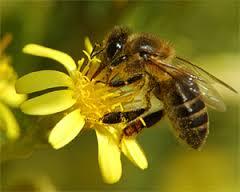 Mortalidad de las colonias de abejas fue analizada con especialistas en la Comisión de Agricultura