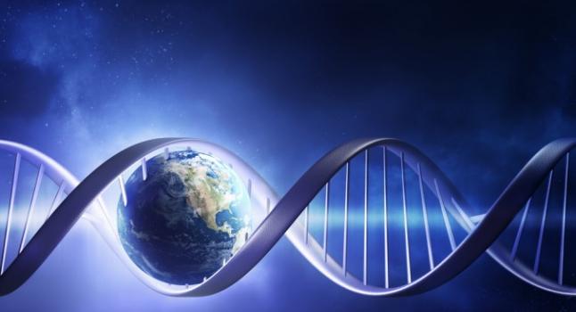 El ADN de los transgénicos puede pasar directamente al cuerpo humano