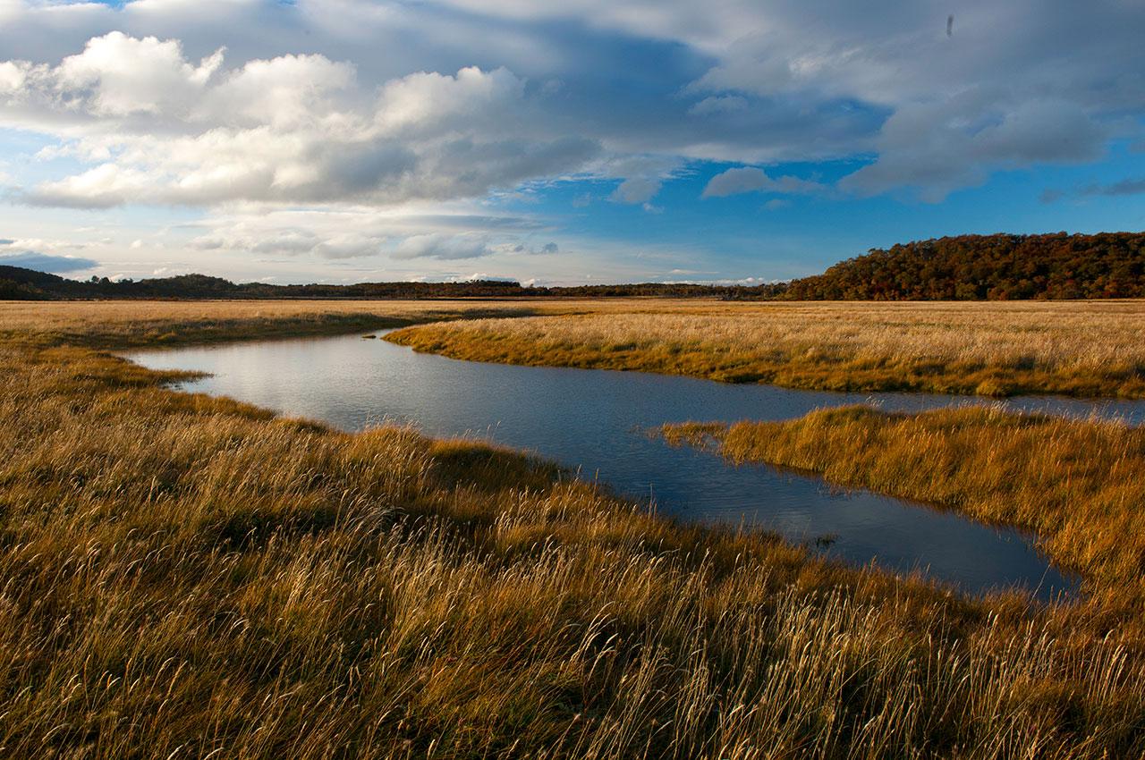Ambientalistas plantean al gobierno su preocupación por proyecto que crea el Servicio de Biodiversidad
