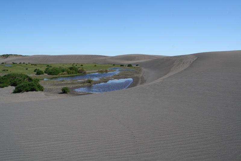 Movimiento en defensa de las dunas se reunió con organismos técnicos