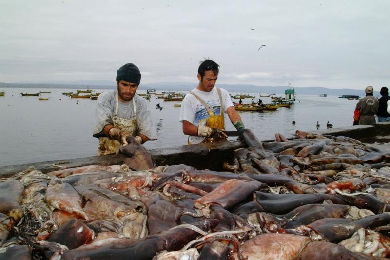 """""""Jibieros"""" de todo Chile llegaron a defender la pesca al Congreso Nacional"""