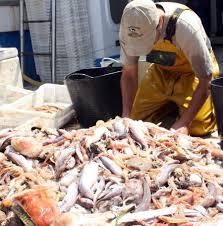 Pescadores artesanales exigen al gobierno terminar con pesca de arrastre en captura de Jibia