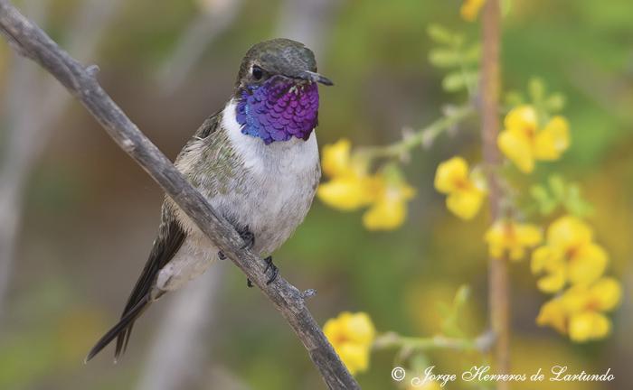 El 66% de las especies de Chile están en peligro