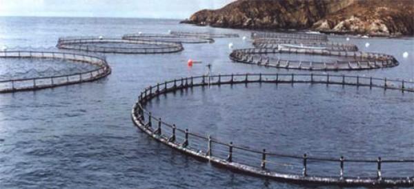 Acciones de pesqueras se disparan entre 5 y 12 por ciento ante prohibición rusa a importaciones de salmón noruego