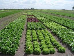 Gobierno descarta que nuevo Código de Aguas perjudique a la agricultura
