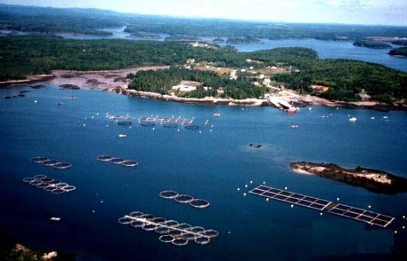 Las dudas de los ambientalistas ante la restricción de concesiones acuícolas