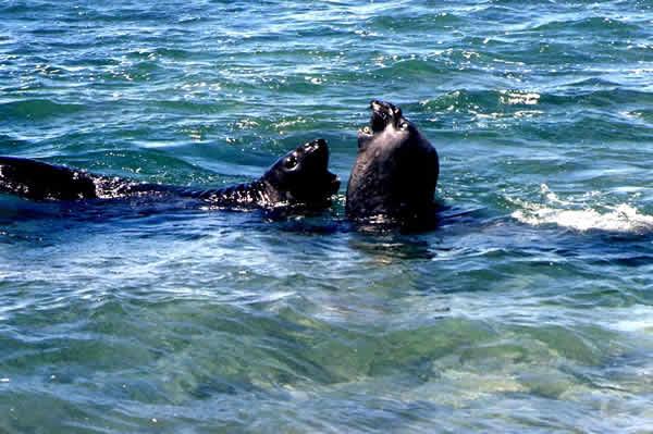 Investigación de la Unión Europea: Estudian el impacto del cambio climático en la vida marina austral