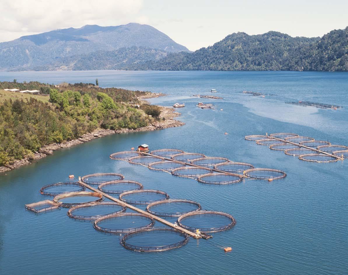 Marine Harvest gana en número de concesiones para salmonicultura en el país