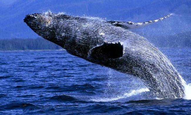El refugio de las ballenas en el desierto chileno