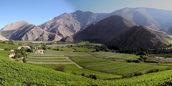 Industria del Vino Invierte US$ 11 millones Para Producir Limpio