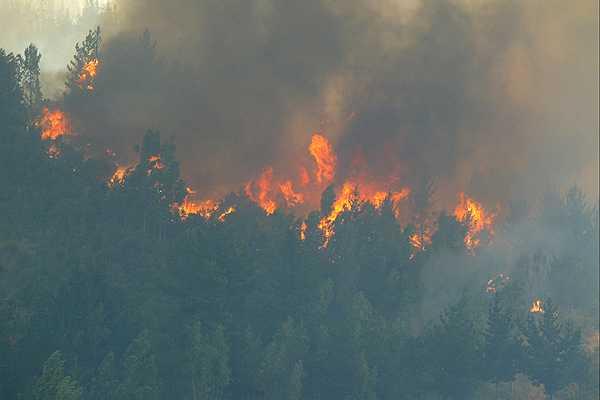Incendio consume 825 héctareas de reserva de la biósfera de Hijuelas
