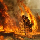 Onemi: 73 incendios forestales continúan activos en el país