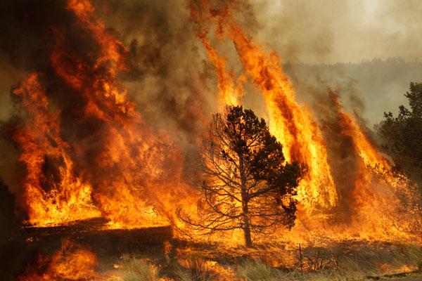 30 incendios forestales al día han consumido 5 mil hectáreas en 4 regiones