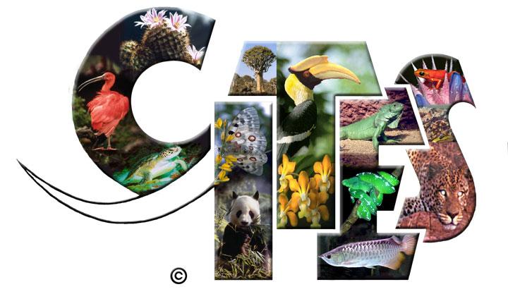 Convención sobre Comercio Internacional de Especies Amenazadas de Fauna y Flora Silvestres vuelve a comisiones