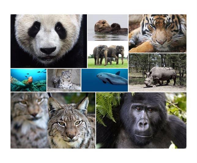 Día de la Tierra 2015: 10 animales en peligro de extinción