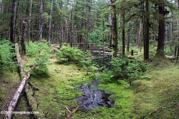 Senadores piden consulta indígena a proyecto que crea servicio de biodiversidad