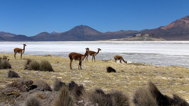 Bachelet crea y deroga Parque Nacional Salar del Huasco  violando Convención de Washington