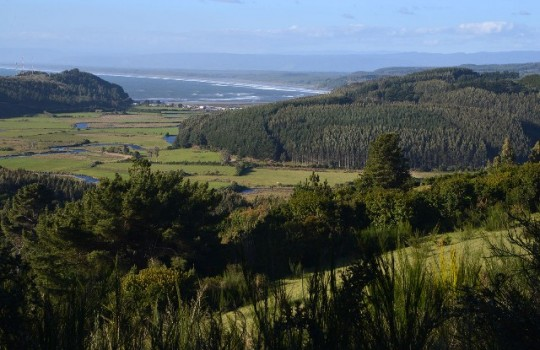 El cambio de uso de suelo afecta a los ecosistemas acuáticos del sur de Chile