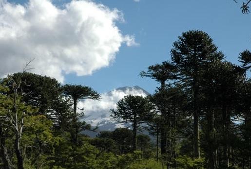 Protección de la flora y fauna: deberán votar idea de legislar