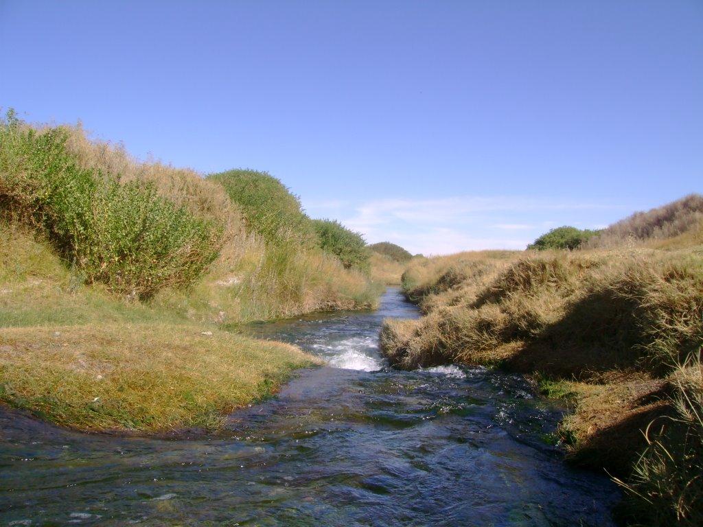 Buscan convertir río Loa en santuario de la naturaleza