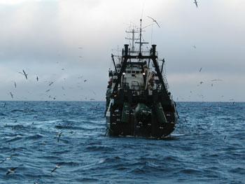 Alertan presencia de una veintena de barcos chinos pescando en ZEE de Chile