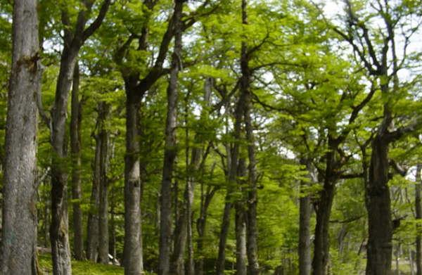 CONAF inicia trabajo del Grupo de Montreal asumiendo como desafío una política forestal para Chile