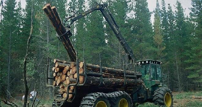Servicio Nacional Forestal: Desafíos y Oportunidades