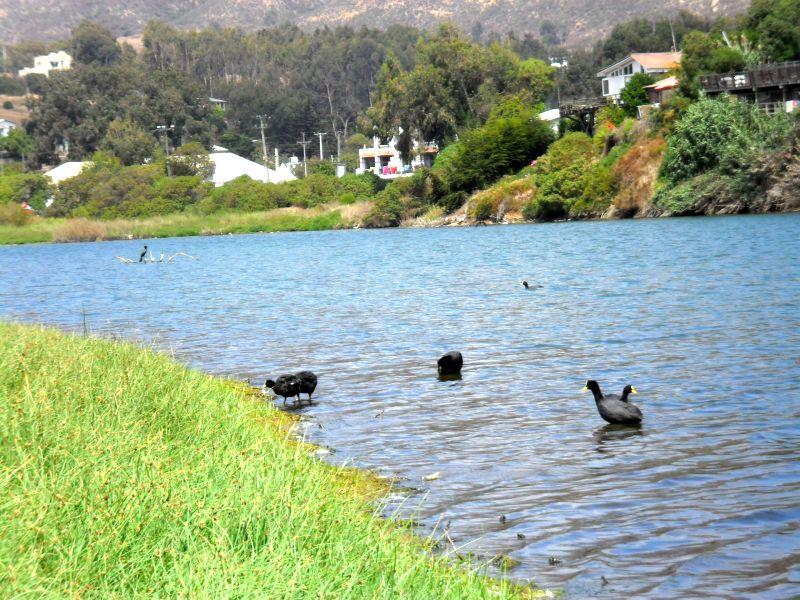 Alertan por impacto ambiental que afecta a Laguna de Zapallar