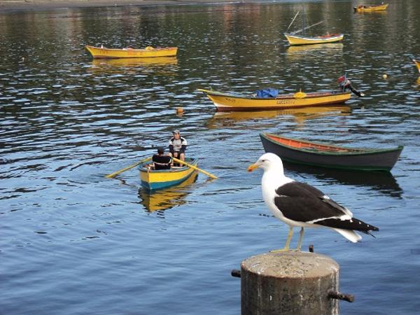 Advierten la contaminación que perjudica a la pesca en la región