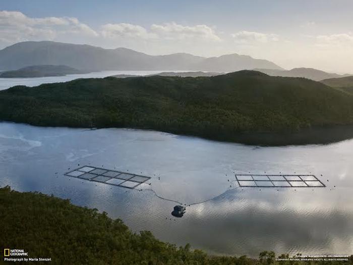 Gobierno se alinea con industria salmonera y aprueba nuevas áreas para la acuicultura en tierras protegidas
