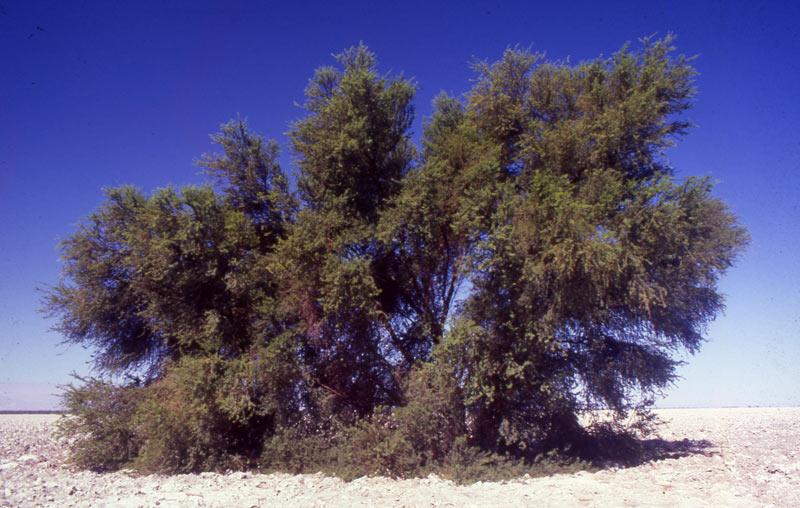 Visitas a terreno y propuestas para integrar más especies de flora contempló cita de Conaf