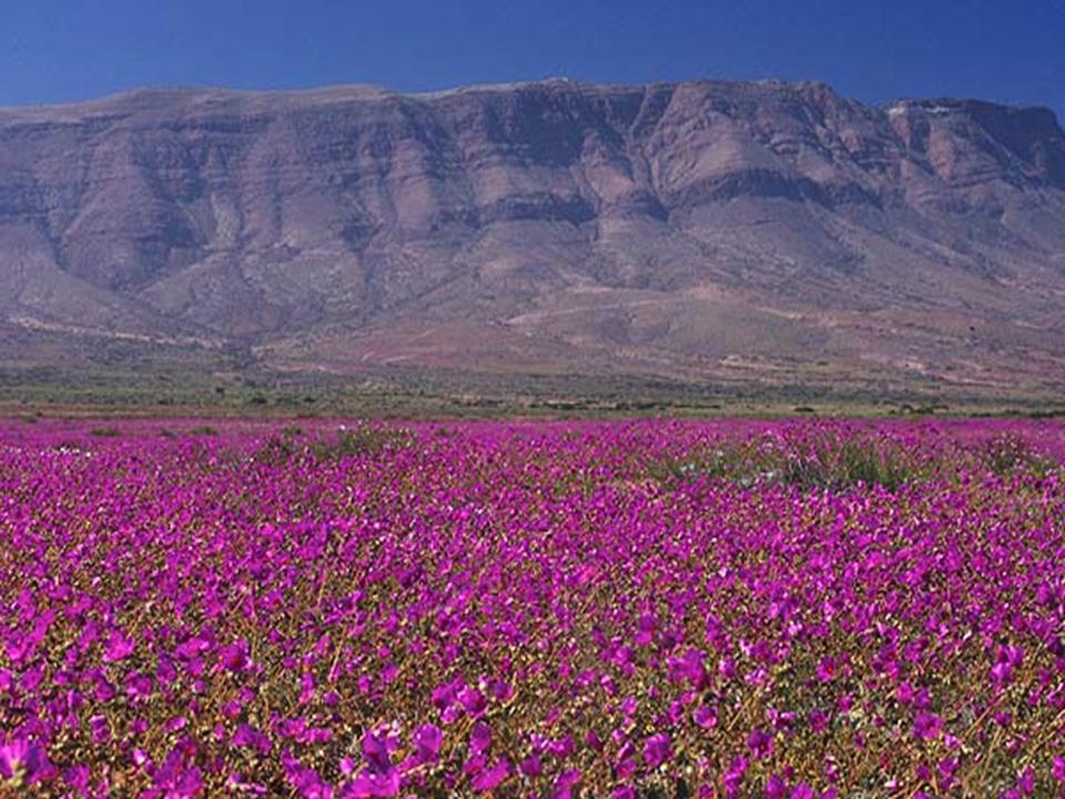 """""""Al desierto florido hay que visitarlo, cuidarlo y no destruirlo"""""""