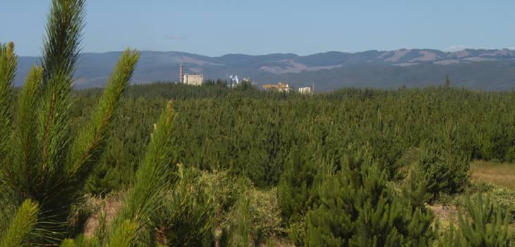 Sector forestal analiza cómo enfrentar el desafío del agua